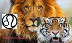 Leo lion tiger photo collage